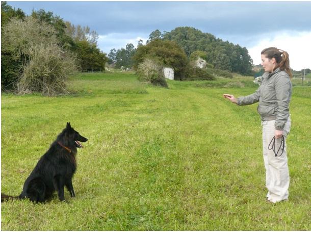 Sit-Essential Dog Training Tips