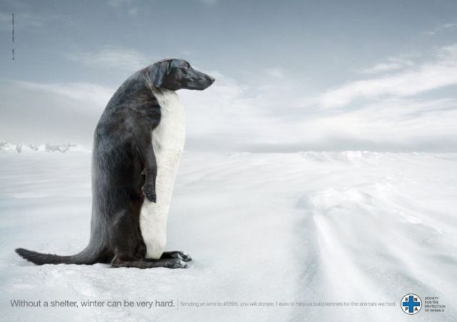 Help for dogs-Most Creative Ads Ever