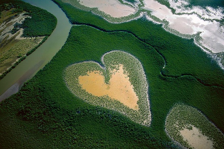 Mangroves, New Caledonia-How Our World Appears To A Bird