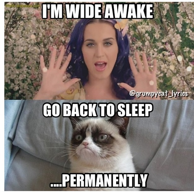 Grumpy cat does not like-23 Hilarious Katy Perry Memes Ever Made