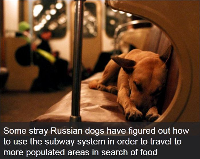 Clever Dogs-24 Interesting Yet Mind Blowing Facts