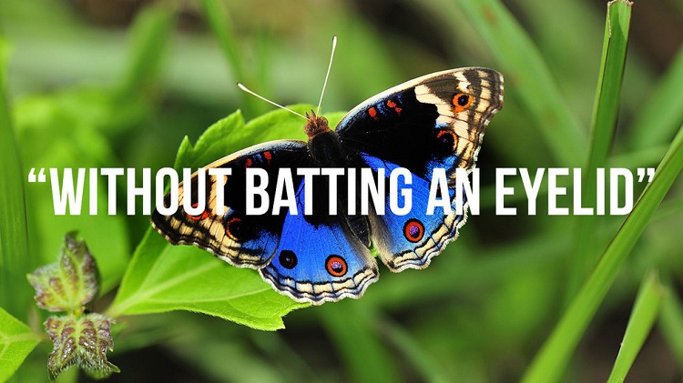 Without Batting An Eyelid-Where British Phrases Came From