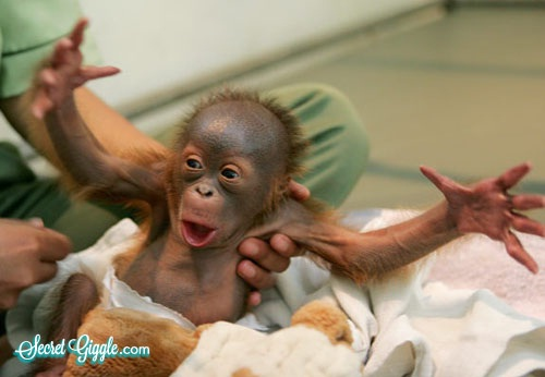 Orangutan-Adorable Baby Animals