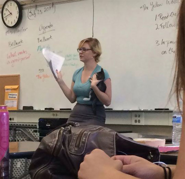 Teacher Who Brought an Abandoned Cat to Class Along with Her-15 Awesome Teachers Everyone Would Like To Have