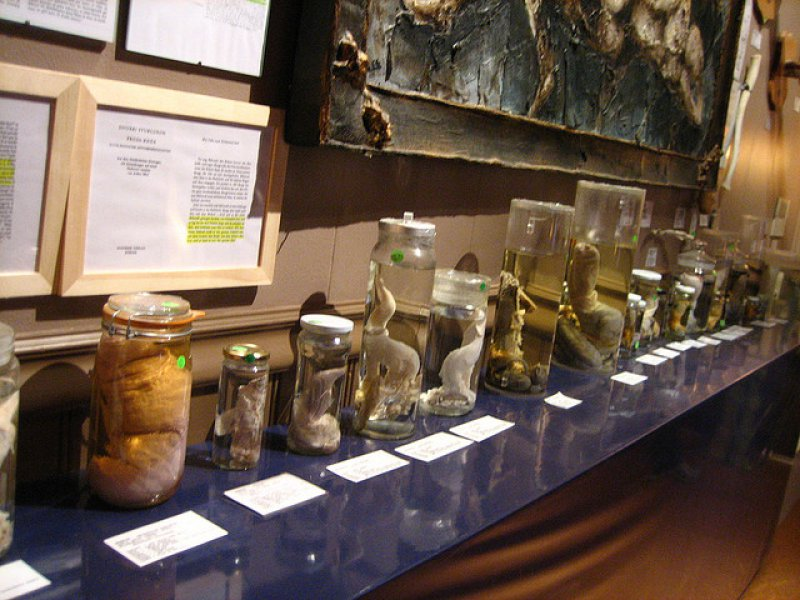 It's Just a Scientific Museum-15 Bizarre Facts About Phallological Museum That Will Leave You Stunned