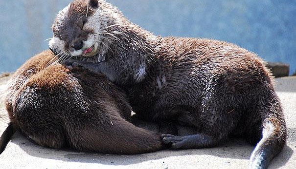 That's All Folks!-Amazing Pics Of Animals Pillowing Each Other