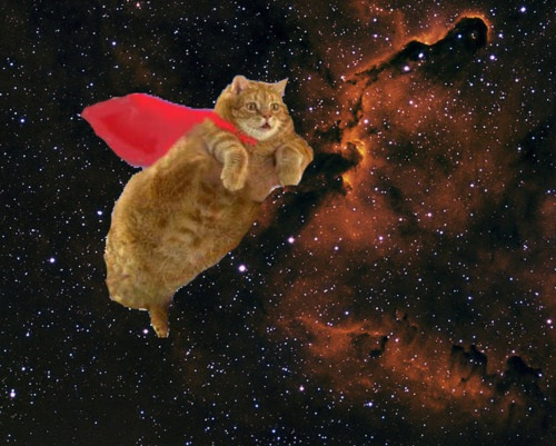 OMG Cats in space-36 Weirdest Websites On The Internet