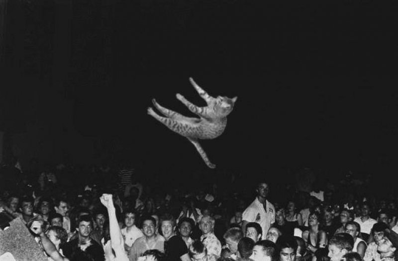Flying cat-15 Hilarious Concert Fails And Bloopers That Will Make You Lol