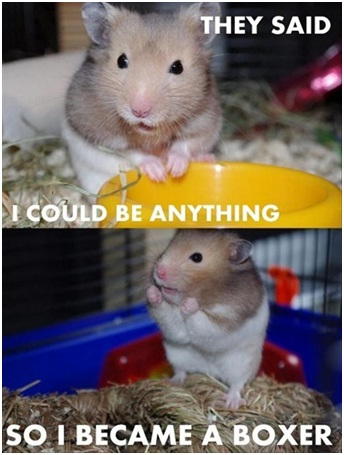 Hamster Boxing-Best 'They Said I Could Be Anything.' Memes