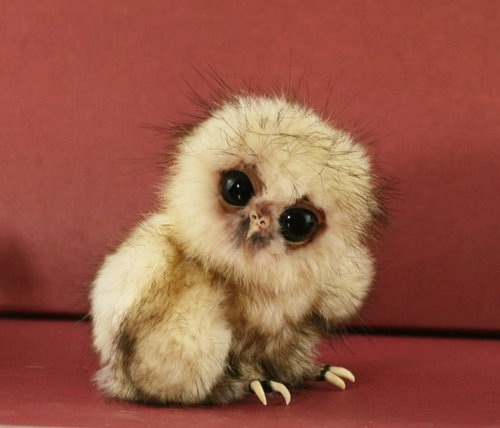 Owl-Adorable Baby Animals