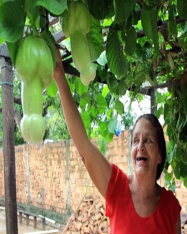 penis fruit-Top 15 Weirdest Shaped Fruits/vegetables