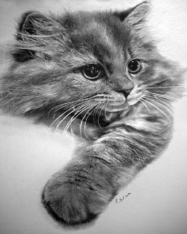 Kitty Cat-Mind Blowing Pencil Art