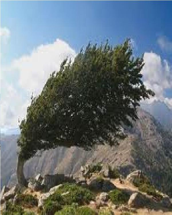 Sideway Tree-Amazing Trees