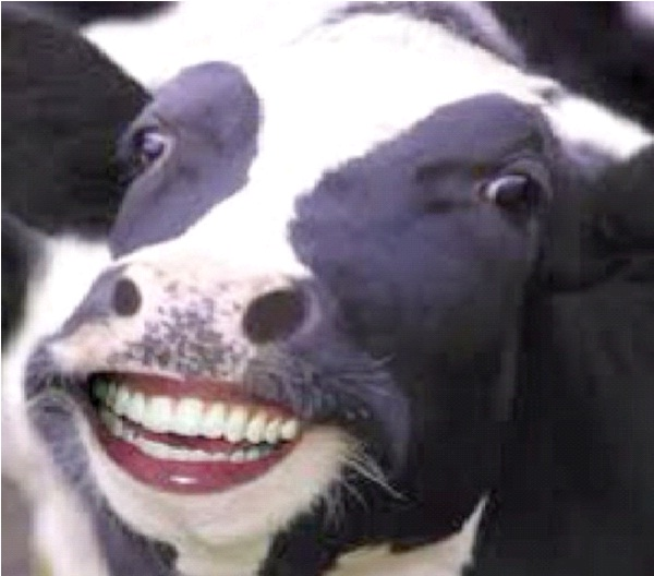 Supercows-Genetically Modified Animals You Can Buy