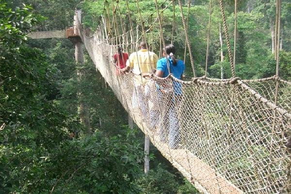 Canopy Walk Bridge - Ghana-Most Extreme Bridges Around The World