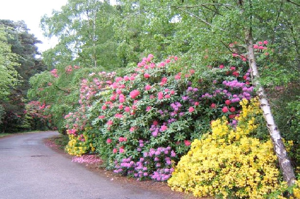 Trim The Shrubs-Top Ways To Make Your House Theft Proof