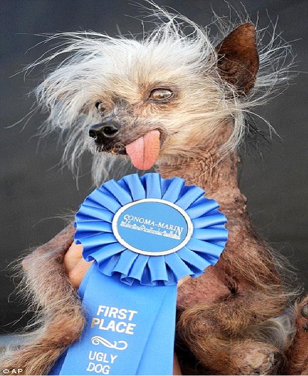 World's Ugliest Dog-Weirdest Competitions Around The World