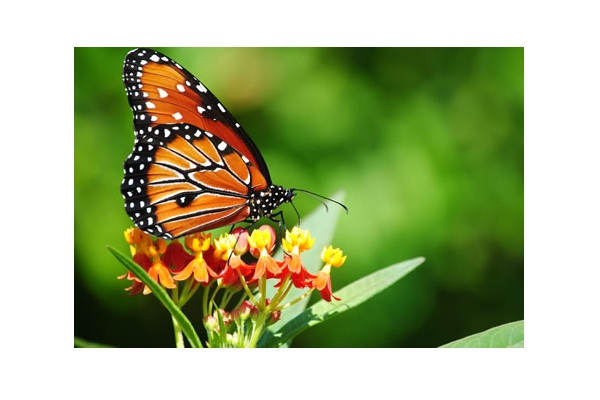 Sell Butterfly's?-Clever Ways People Make Money In Today's Economy