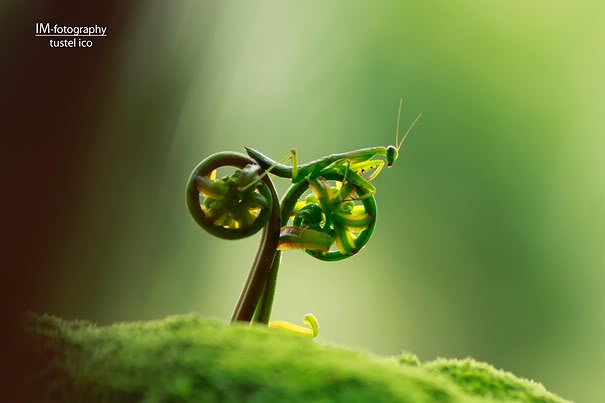 Ho Hum-Amazing Perfectly Timed Photos Of Animals