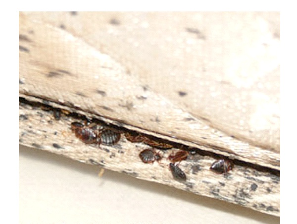 Check Mattress and Cover with Plastic-How To Get Rid Of Bed Bugs