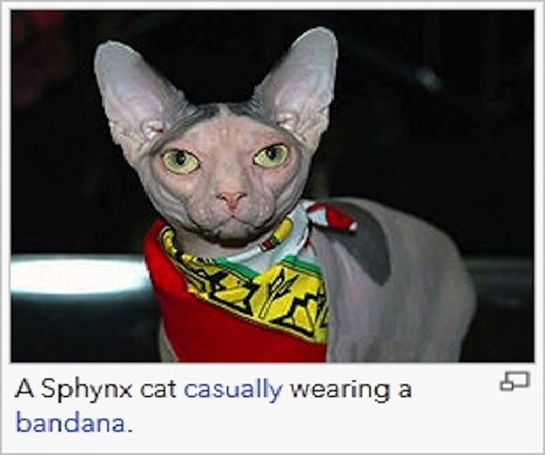Funky cat-12 Most Ridiculous Wikipedia Picture Captions
