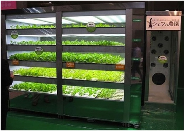 Lettuce Vending Machine-Weird Vending Machines