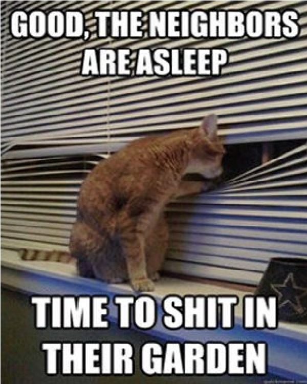 Cat spy-Funniest Cat Memes Of All Time