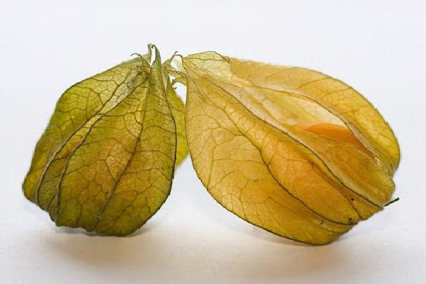 Physalis-Most Popular Exotic Fruits