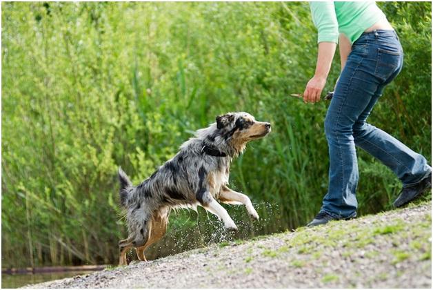 Come-Essential Dog Training Tips