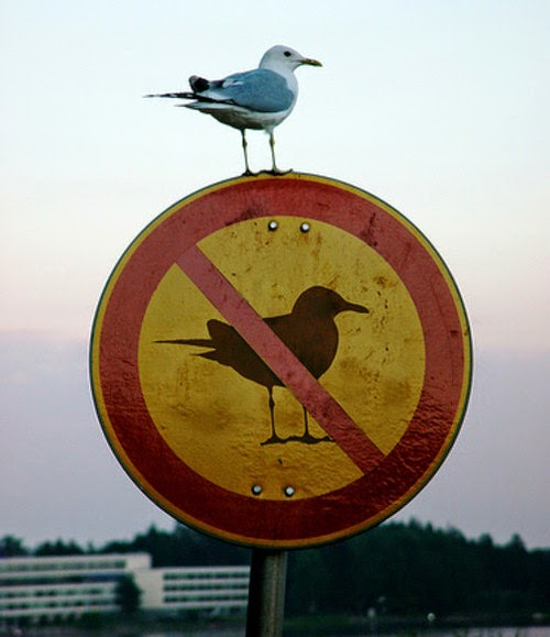 Bird Knows What's up-15 Images That Show Irony In This World