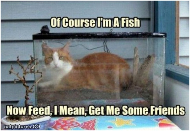 Cat-Fish-Best 'They Said I Could Be Anything.' Memes