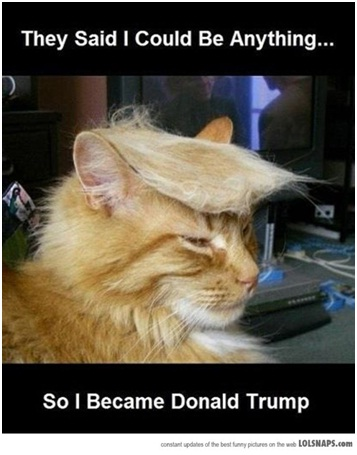 Donald Trump Cat-Best 'They Said I Could Be Anything.' Memes
