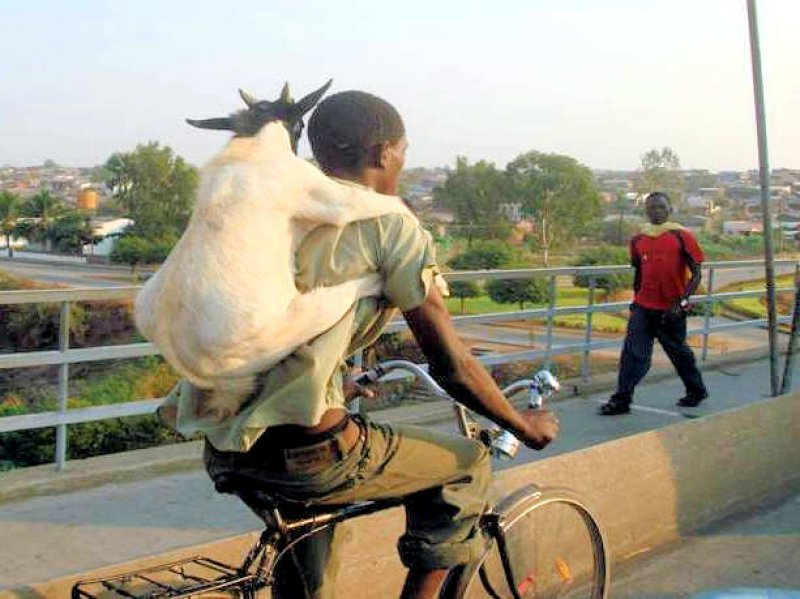 All He Has a Bike and Goat-15 Images That Prove Life's Not Fair With Everyone