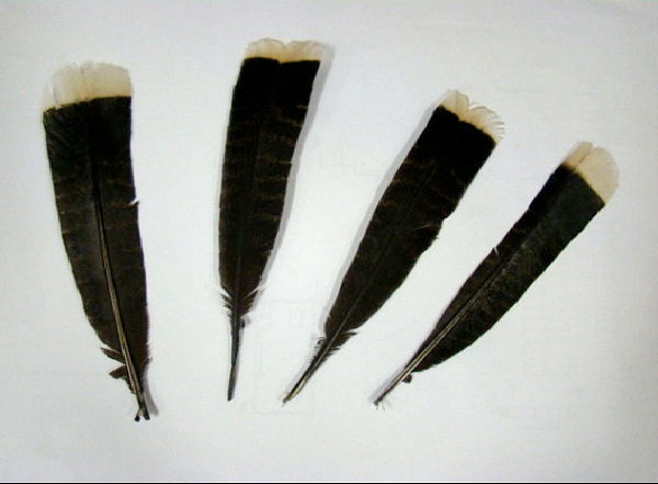 Feather: Extinct Huia Bird - $6787-Most Expensive Things In The World