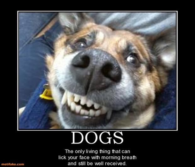 Poor Doggy-12 Funniest Demotivational Pictures Ever