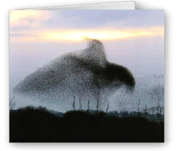 A Bird-Most Amazing Bird Formations In Sky