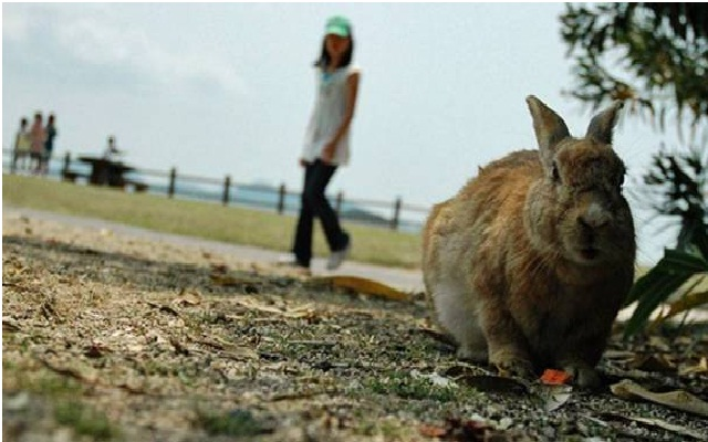 Don t take that rabbits picture-Most Bizarre Laws