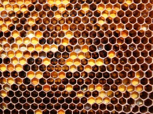 Honeycomb-Worst Nightmares For Trypophobics(Fear Of Holes)