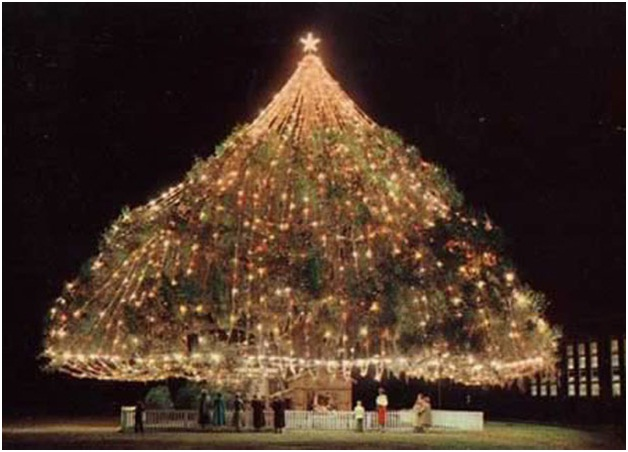 Largest Living Christmas Tree in the World-Most Amazing Christmas Trees From Around The Globe
