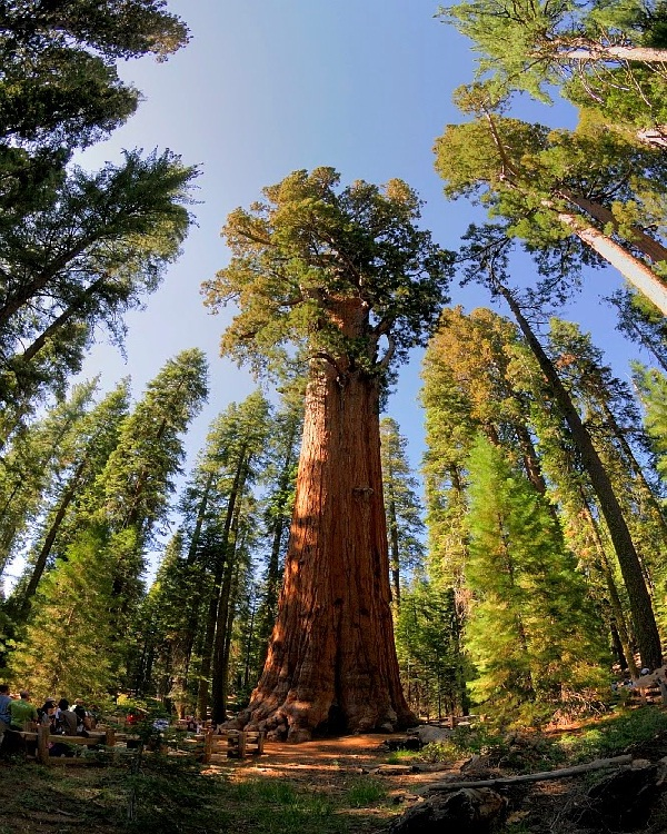 General Sherman-Amazing Trees