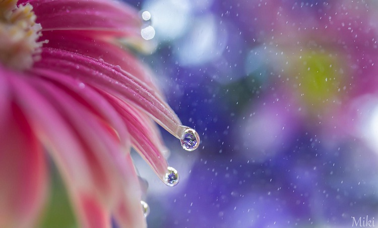 Fantasy-Amazing Water Droplet Photography By Miki Asai