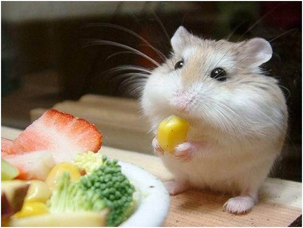 Tiny Hamster-Cutest Animals Ever