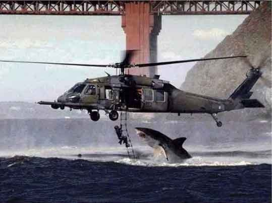 Watch out for the shark!!-Viral Photos That Turned Out To Be Fake