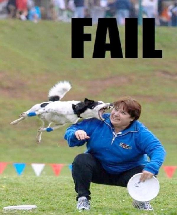 Nice Doggy-Funny Animal Fails