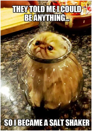 Salt Shaker Kitty-Best 'They Said I Could Be Anything.' Memes