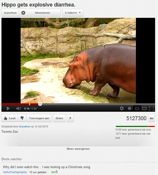 Hippo Gets Explosive Diarrhea-Most Hilarious YouTube Comments