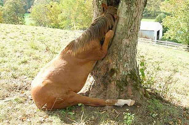 A horse in a tree-Funny Animals Stuck In Objects