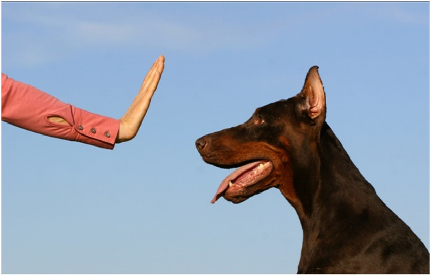 Stay-Essential Dog Training Tips