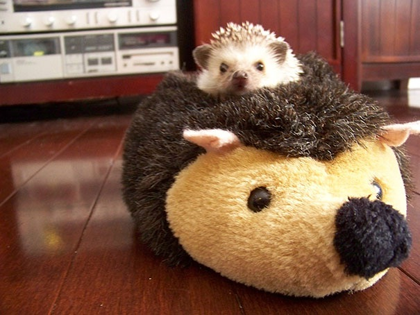 A hedgehog with a hedgehog-Baby Animals With Stuffed Toys