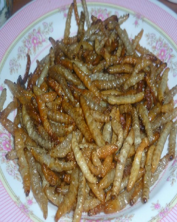 Bamboo Worm-Edible Insects